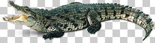 Crocodiles Chinese Alligator Gharial PNG