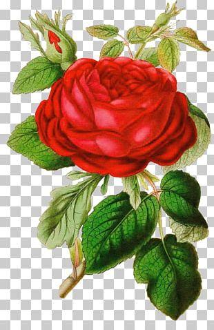 Rose Vintage Clothing PNG