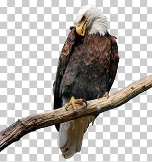 Eagle Bitmap Computer File PNG