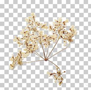 Flower Bouquet Drought PNG