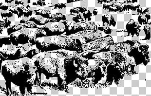 Buffalo Herd American Bison PNG