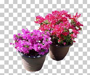 Flowerpot Plant Garden Bougainvillea Glabra PNG