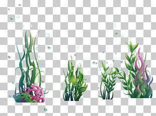 Algae Plant Seaweed Ocean PNG
