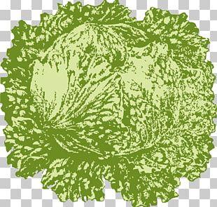 Iceberg Lettuce Vegetarian Cuisine Leaf Vegetable PNG
