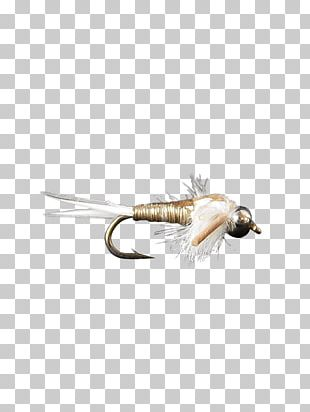 Nymph Elk Hair Caddis Fly Fishing B & H Photo Video Sales PNG