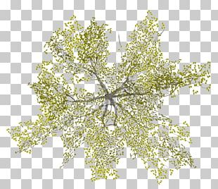 Tree Architecture PNG
