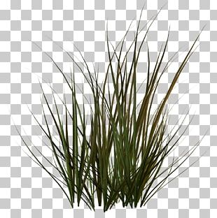 Cartoon Grass Dark Grass PNG