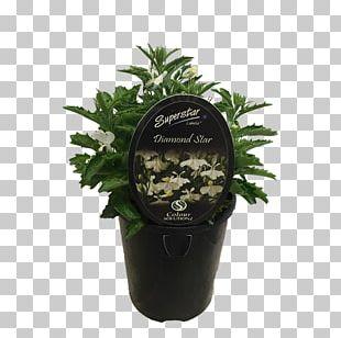 Flowerpot Shihas Holdings Ornamental Plant Shrub Garden PNG