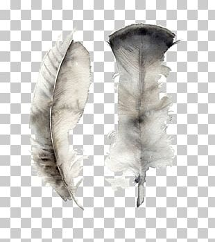 Feather Watercolor Painting Art Canvas PNG