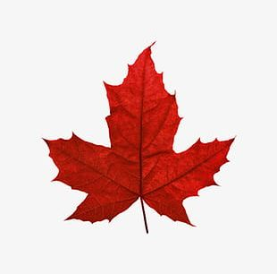 Red Maple Leaf Canada PNG