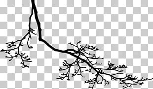 Twig Branch Black And White PNG