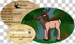 Reindeer Horse Antler Mammal Wildlife PNG