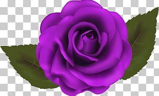 Garden Roses Cabbage Rose China Rose Floribunda PNG