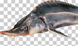 Deep Sea Fish Body Of Water Pond Freshwater Fish PNG