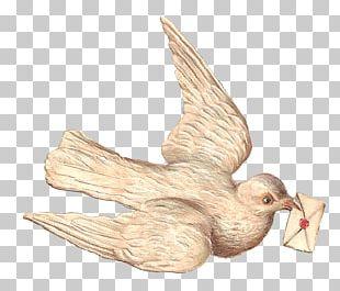 Bird Columbidae Swallow PNG