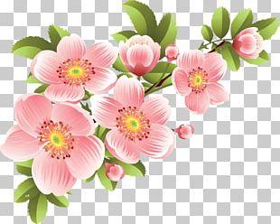 Flower Banner PNG