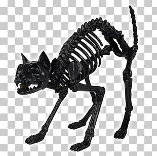 Skull Skeleton Bone Spirit Halloween Cat PNG