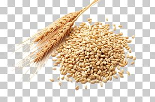 Wheat Germ Oil Atta Flour Cereal Germ Wheat Berry PNG