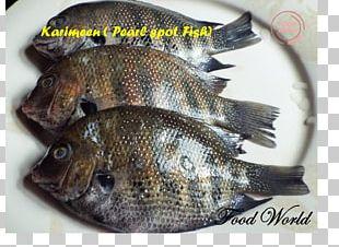 Tilapia Fish Products Green Chromide Tempura PNG
