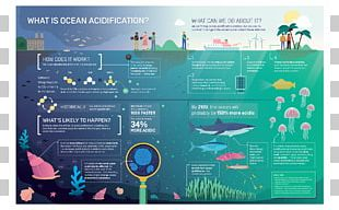 Ocean Acidification Global Warming Carbon Dioxide PNG