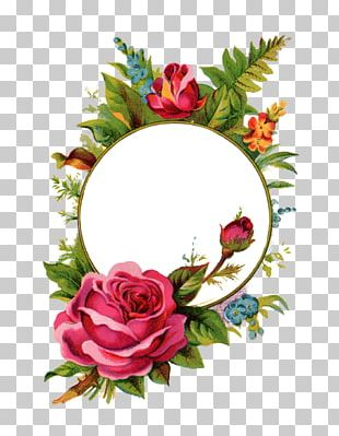 Frames Rose Stock Photography PNG