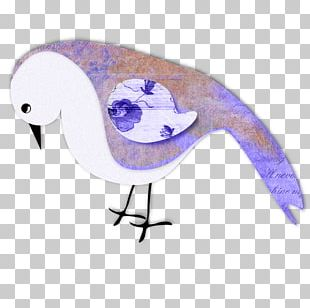 Beak Water Bird Fauna Feather PNG
