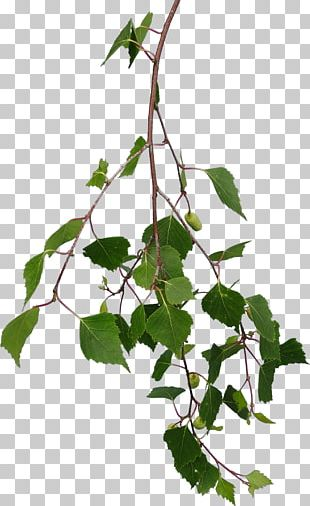 Branch Tree Leaf Texture Mapping PNG