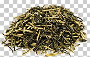 Green Tea Oolong Kukicha Sencha PNG