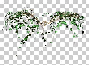 Vine Computer Icons Desktop Photography PNG