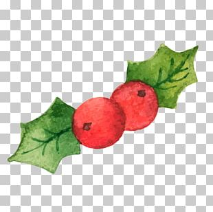 Common Holly Christmas Illustration PNG