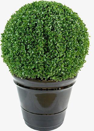 Pot Gardening PNG