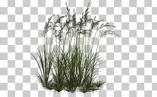 Computer Icons Ornamental Grass PNG