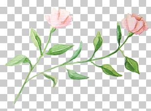 Watercolour Flowers Garden Roses Watercolor Painting PNG