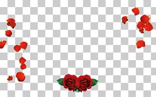 Petal Beach Rose Valentines Day Love Red PNG