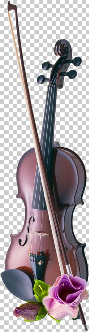 Cello Violin Musical Instruments String Instruments PNG