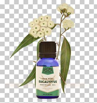 Gum Trees Eucalyptus Oil Essential Oil Plant PNG
