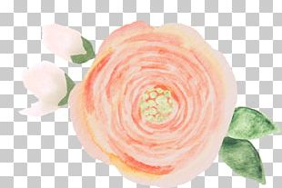 Garden Roses Founded In Honor Petal Cut Flowers PNG
