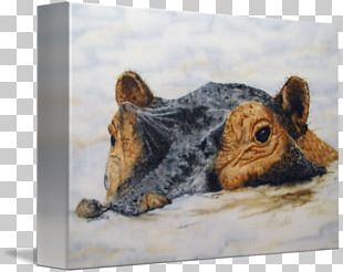 Rodent Painting Fauna Snout Wildlife PNG