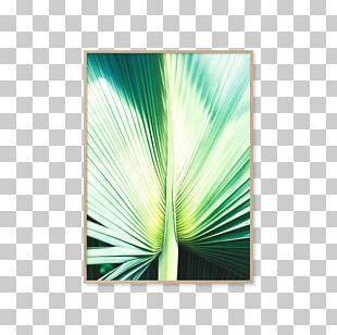 Photography Light Poster PNG