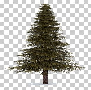 Spruce Christmas Ornament Fir Pine Christmas Tree PNG
