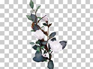 Twig Flowering Plant Leaf PNG