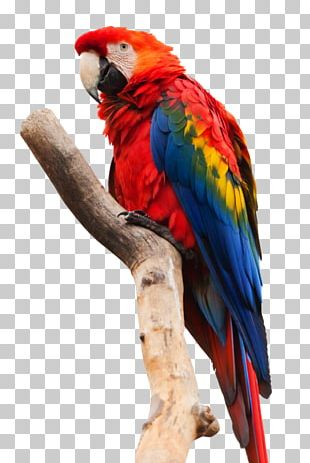 Parrot Scarlet Macaw Bird Red-and-green Macaw PNG