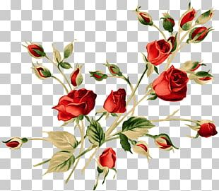 Rose Floral Design Watercolor Painting Flower PNG