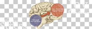 Brain Neurology Body Jewellery Ear Jaw PNG