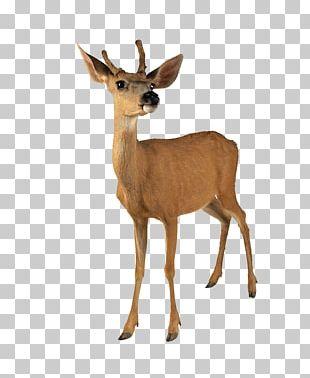 Roe Deer White-tailed Deer Reindeer Moose PNG
