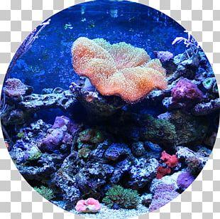 Reef Aquarium Aquariums Aquarium Filters Fish PNG
