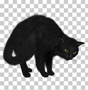 Black Cat Looking PNG