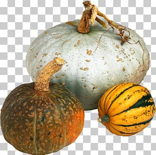 Cucurbita Maxima Pumpkin Vegetable Winter Squash Food PNG