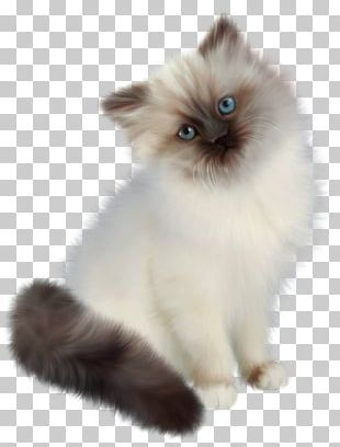 Ragdoll Persian Cat Siamese Cat Birman Himalayan Cat PNG
