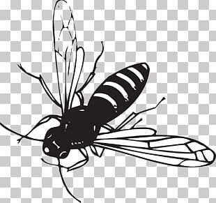 Worker Bee Insect Drawing PNG